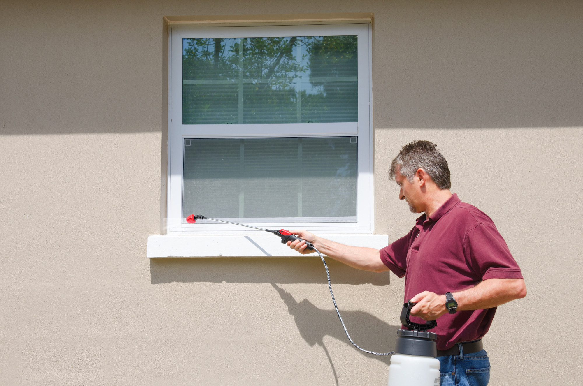Professional pest control service DIY home owner