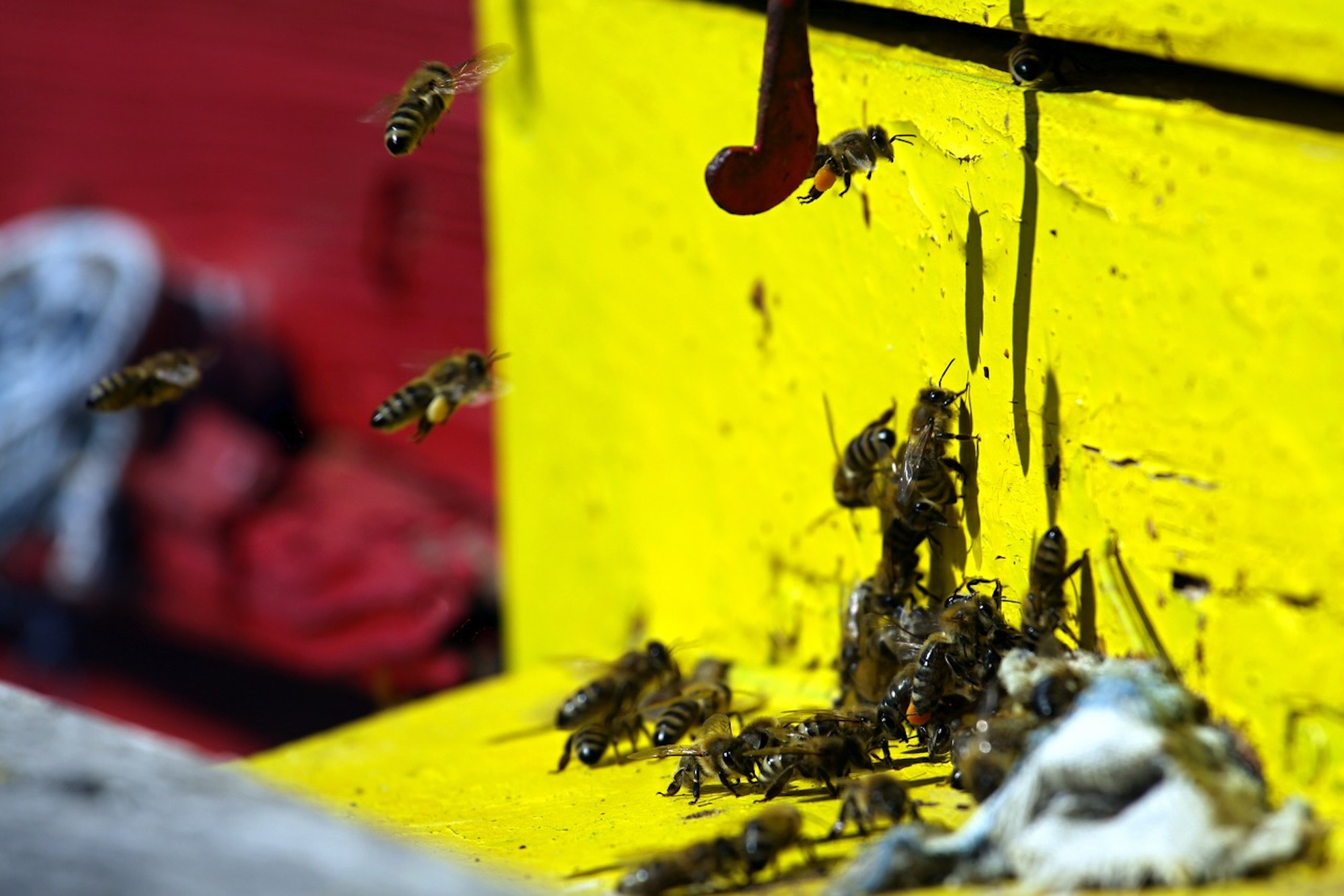 bees-16905_1280